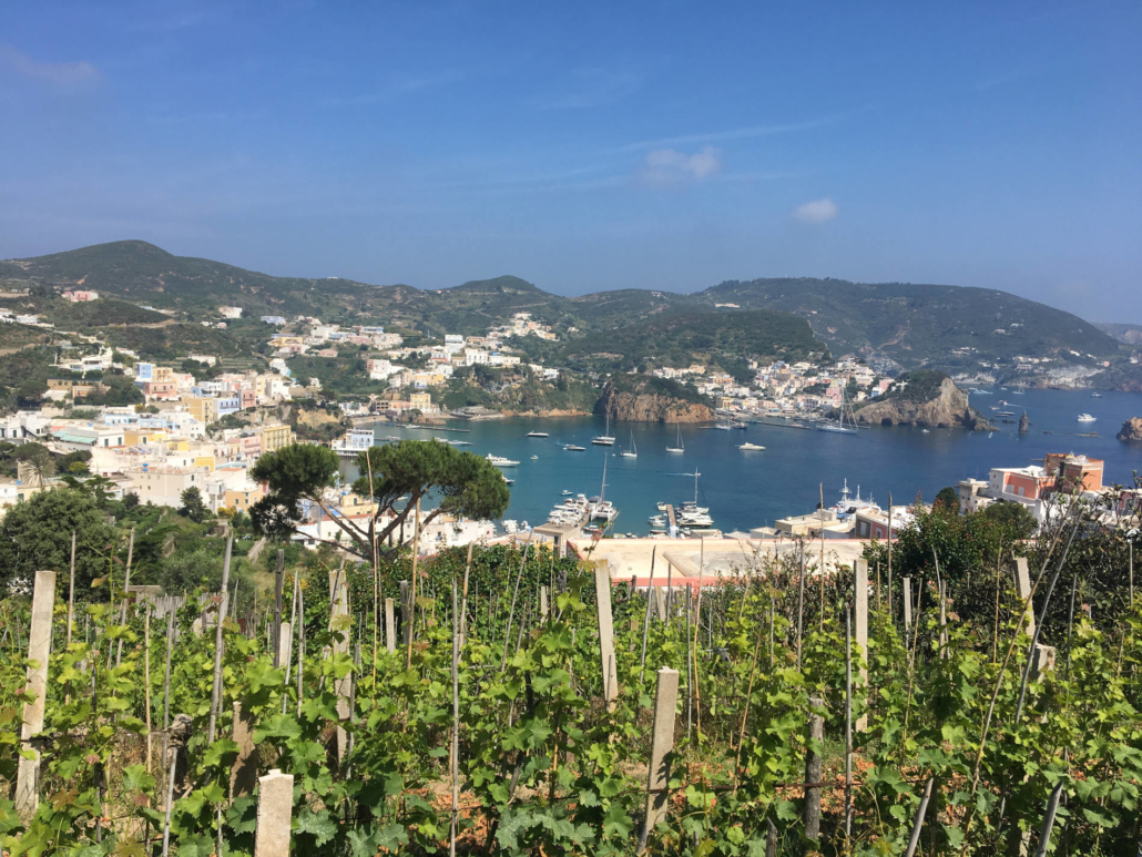 ponza faro della guardia vineyards harbour boats sipping wine